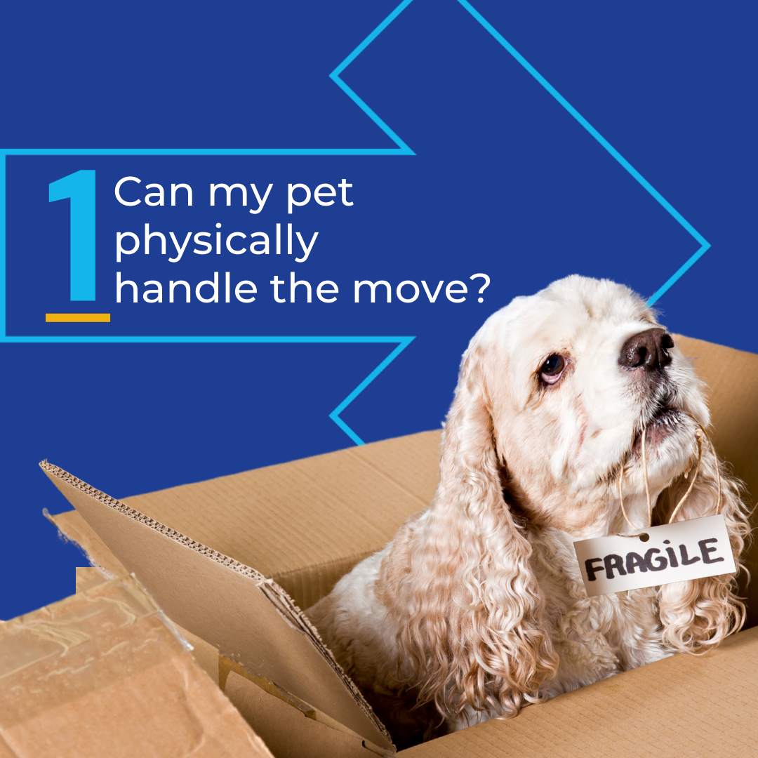 Can My pet physically handle my global pet relocation and move?